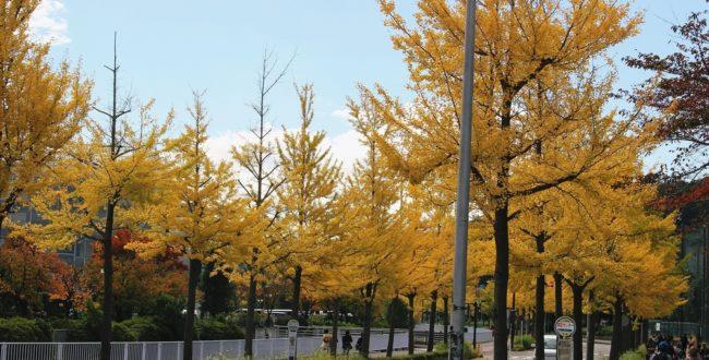 金沢区2020年11月イベント