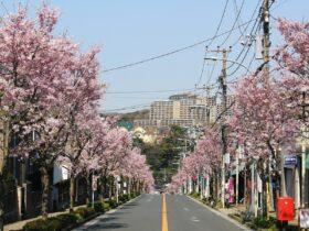 横浜 金沢区 2021年3月イベント情報